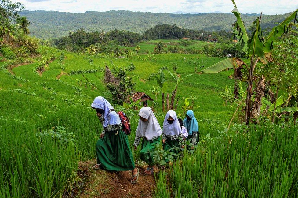 مدينة سيامس، في جزيرة جاوة الغربية بإندونيسيا،