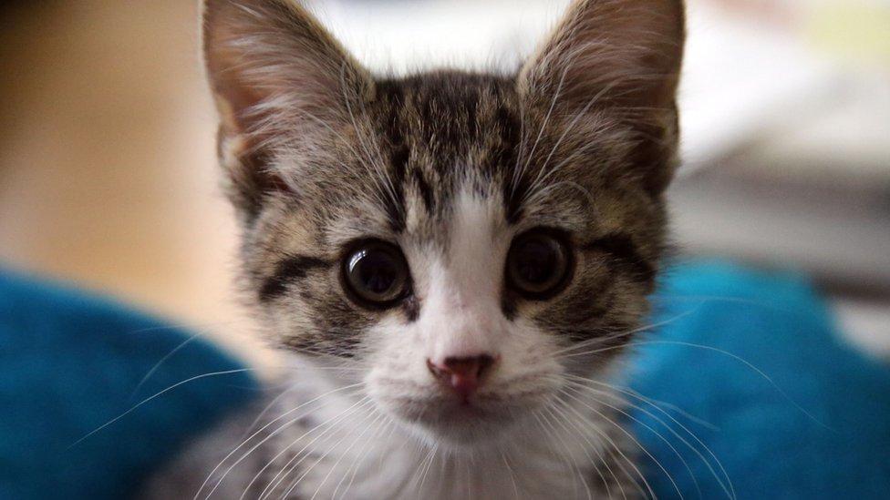 A kitten given to Wikileaks founder Julian Assange