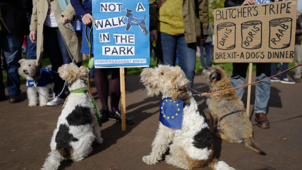 Dogs at Brexit march