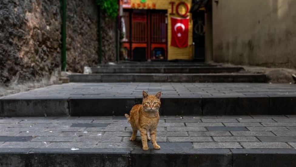 mačka u istanbulu
