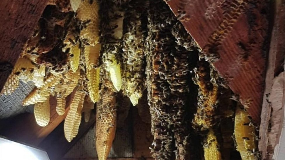 Tens of thousands of bees removed from house