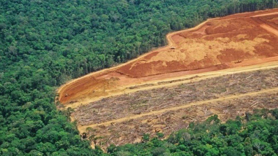 亞馬遜流域毀林造田種植大豆