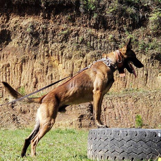 Cachorro farejador