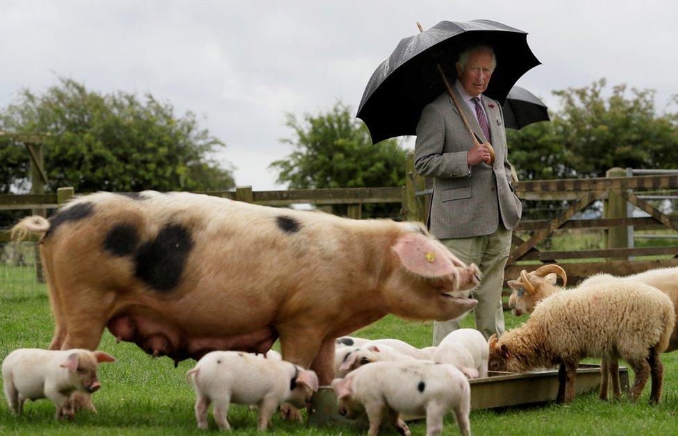 查爾斯王子在農場