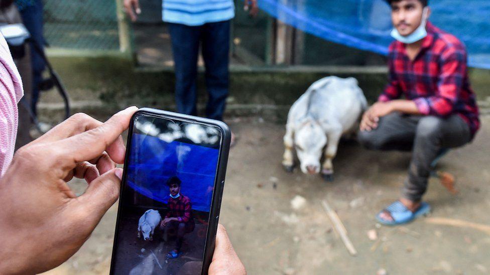 أحد الزوار يلتقط صورة مع البقرة راني