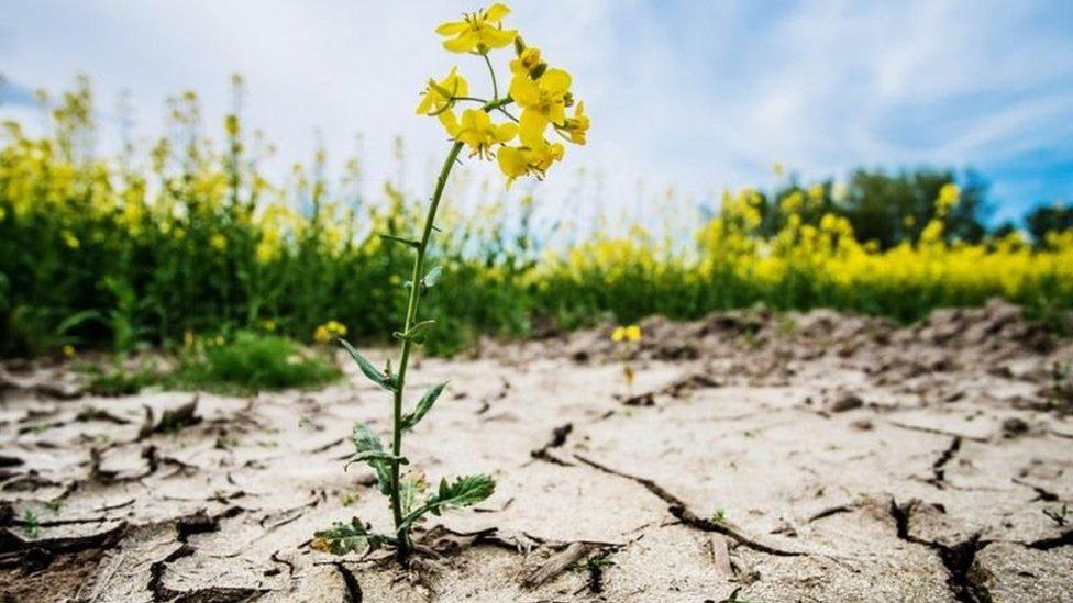 乾旱的農田