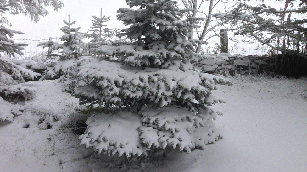 Snow in Llangollen