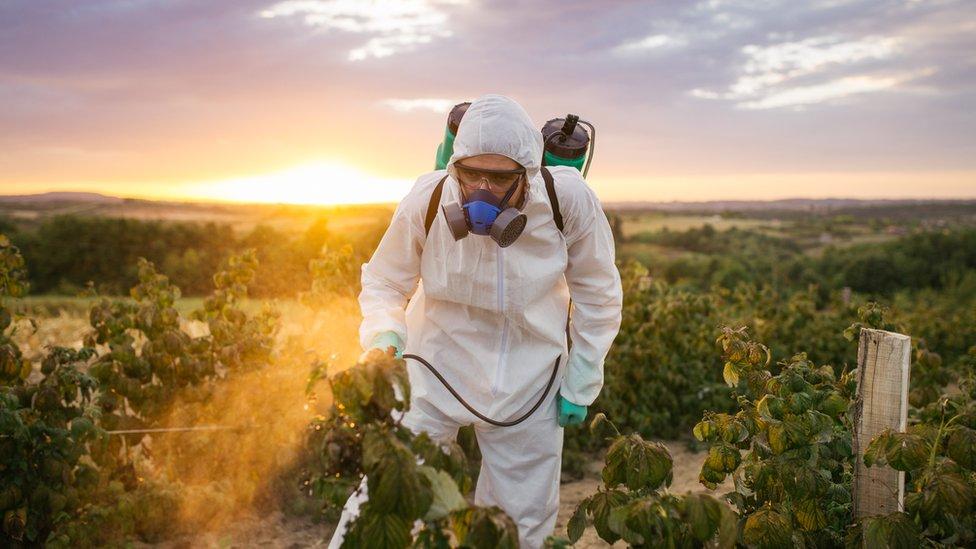 Un señor fumigando unos cultivos