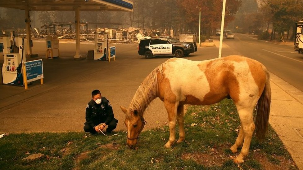 Konj pase travu kod benzinske pumpe