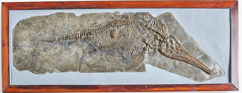 A specimen of Ichthyosaurus communis that was discovered by Mary Anning
