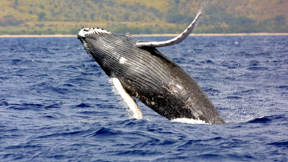 Photo of humpback whale