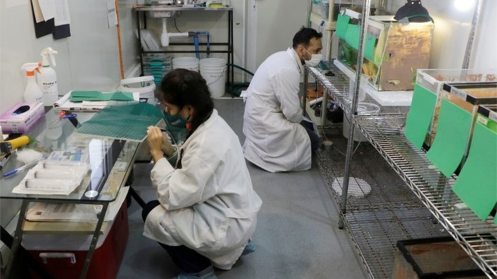 Scientists work inside the laboratory in Santiago, Chile, October 20, 2020
