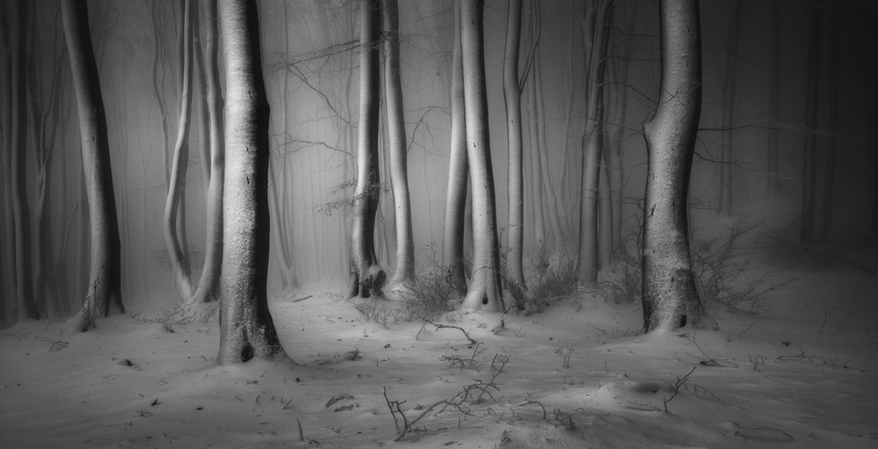 A view of a snow-covered forest