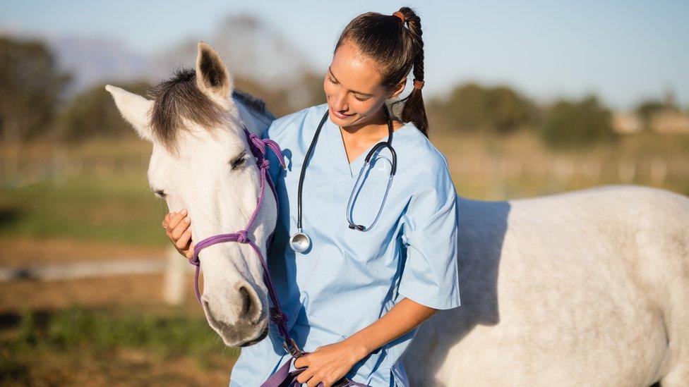 A vet stroking a horse