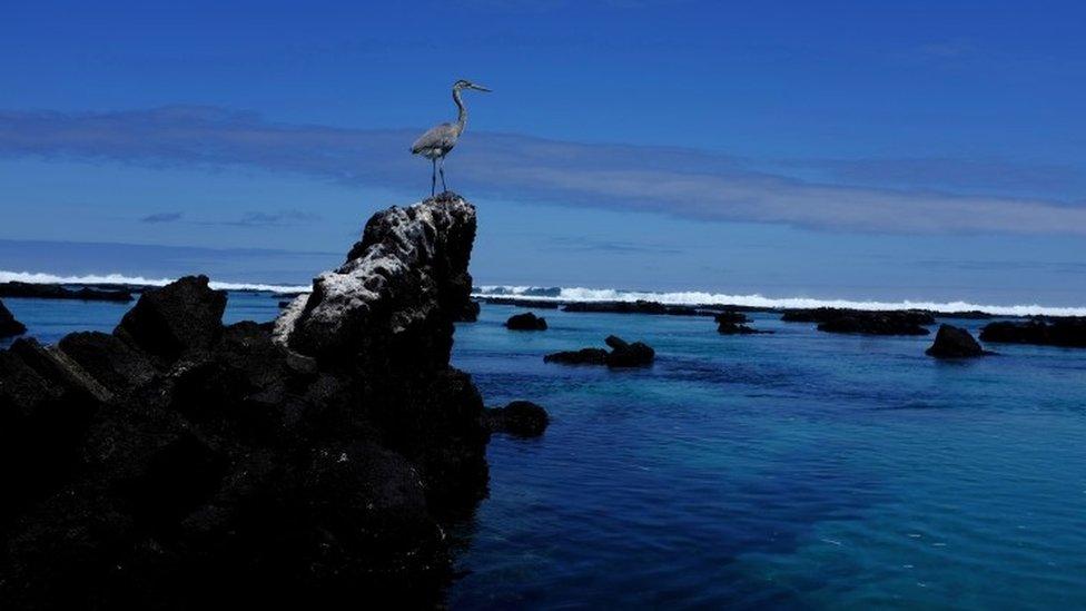 加拉帕戈斯群島以其獨特的植物和野生動植物而聞名