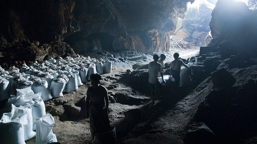 Los aldeanos cosechan guano en una caverna,