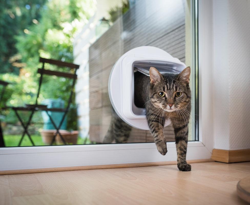 prolaz za mačke