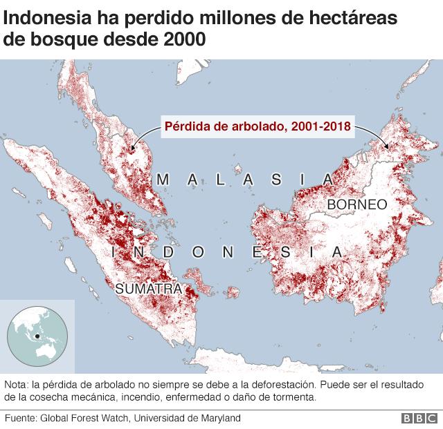 Gráfico pérdida de bosque en Indonesia.
