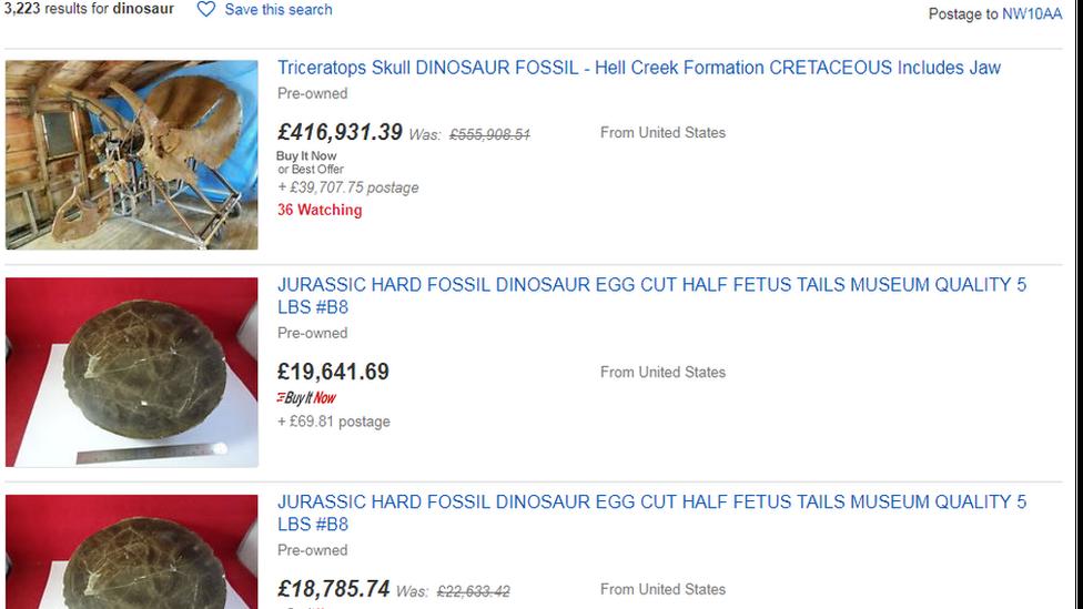 eBay Dinosaur fossil search
