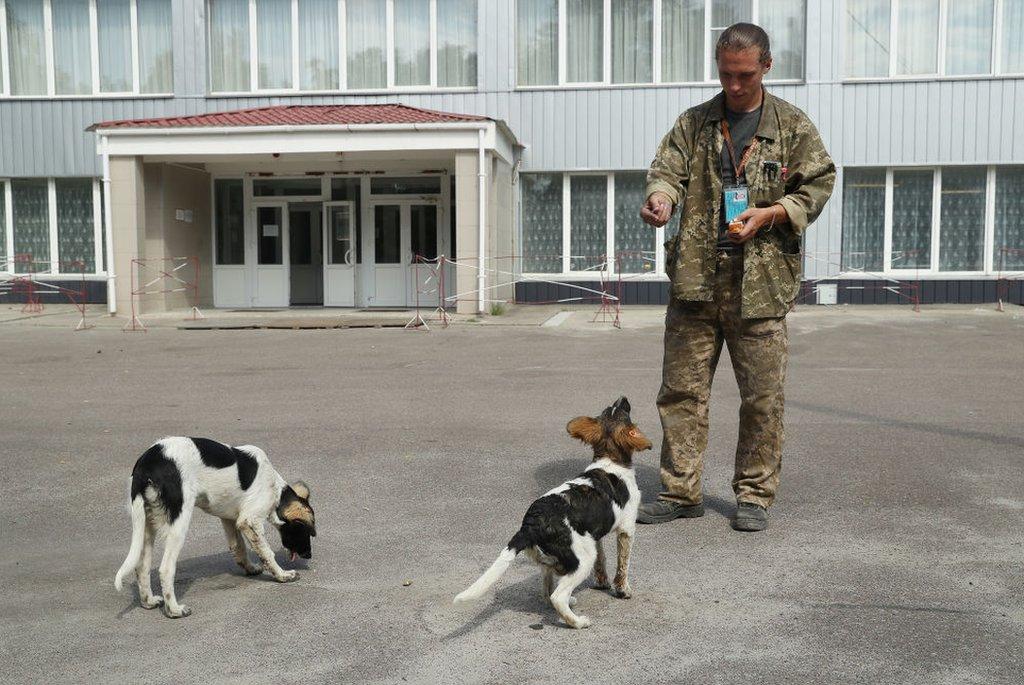 Sergey Shamray, trabajador de la planta nuclear de Chernóbil le da pedazos de pan a unos perros callejeros, en 2017.