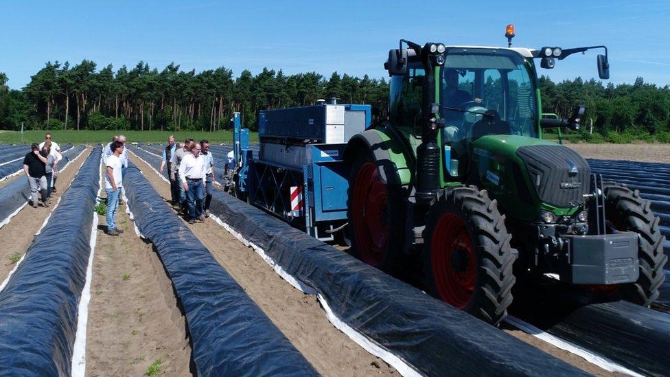 máquina cosechadora de espárragos