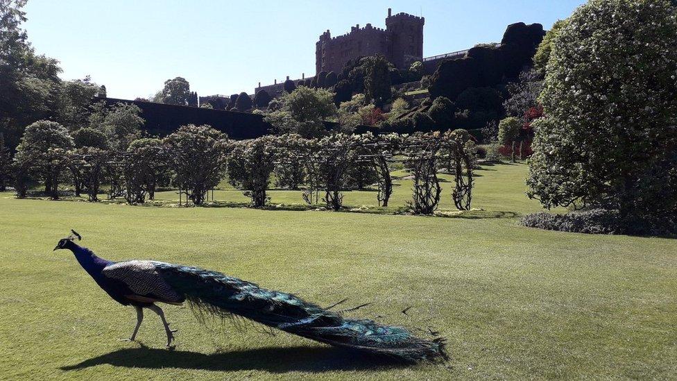 城堡裏的孔雀是吸引遊客目光的焦點