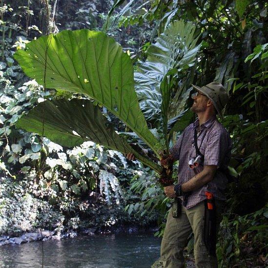 Mauricio Diazgranados observa una planta durante una expedición en Colombia