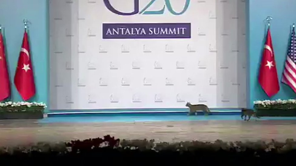 Cats on the G20 Leader's Summit stage