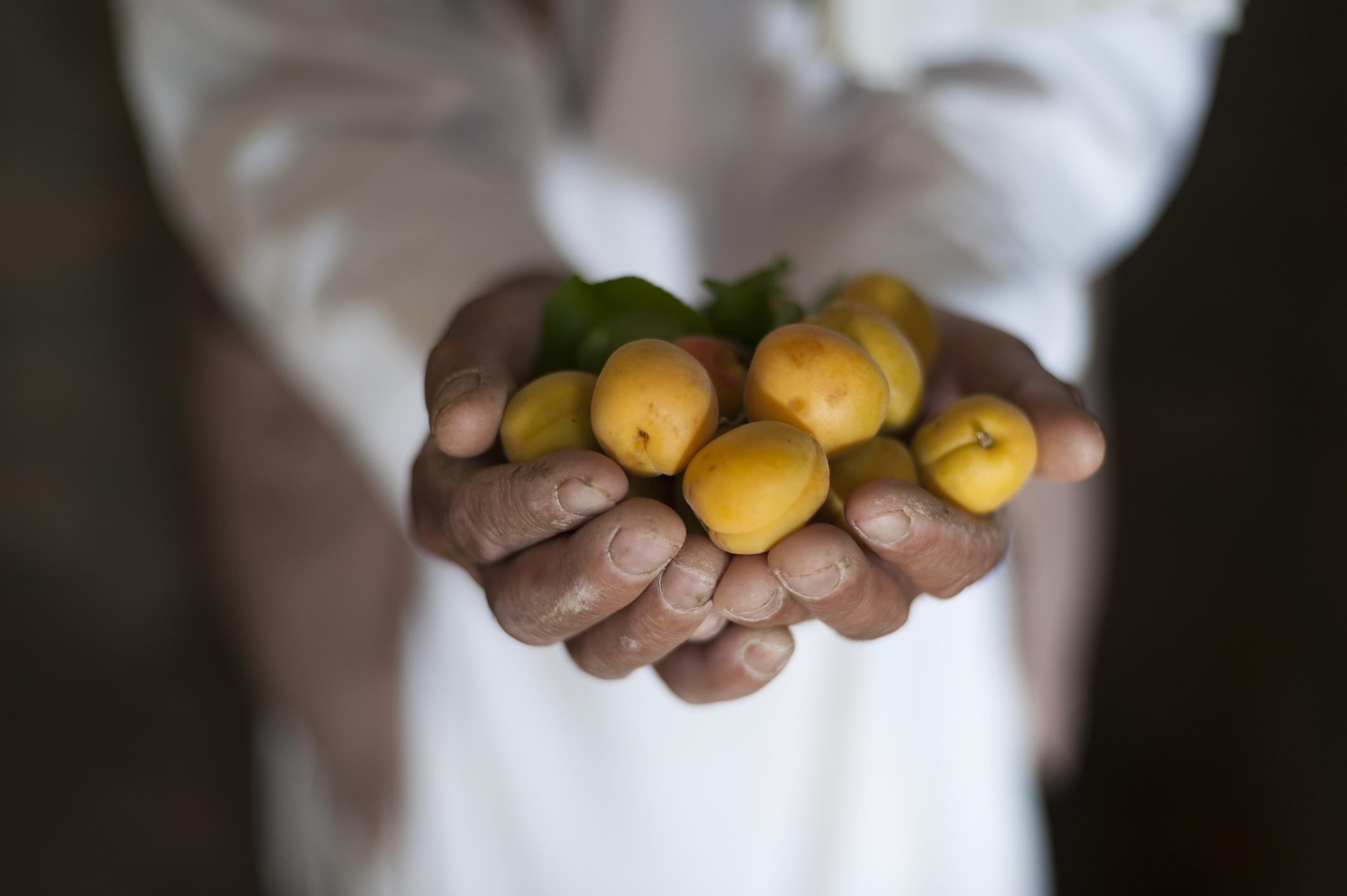 Manos de un hombre inclinado con frutas en la mano