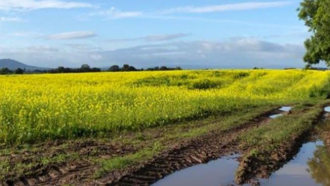 Your photos: Wet fields and umbrellas