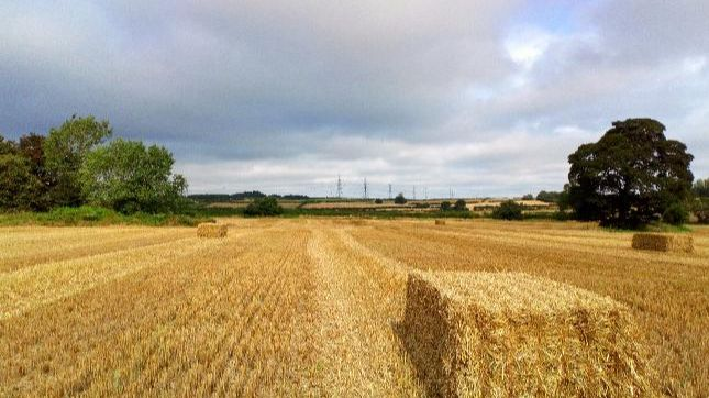 Your photos: Fields of gold